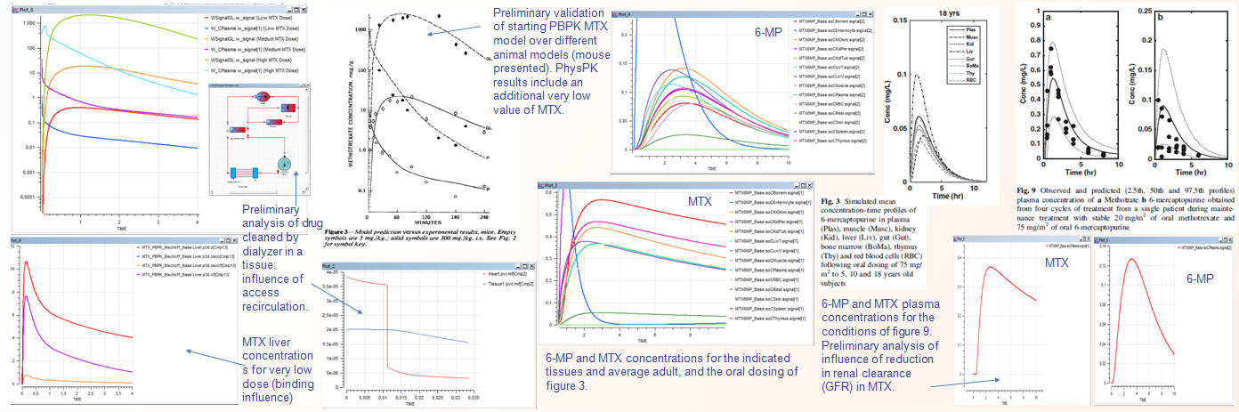 Results of PBPK model with oral administration of MTX and 6-MP under PhysPK