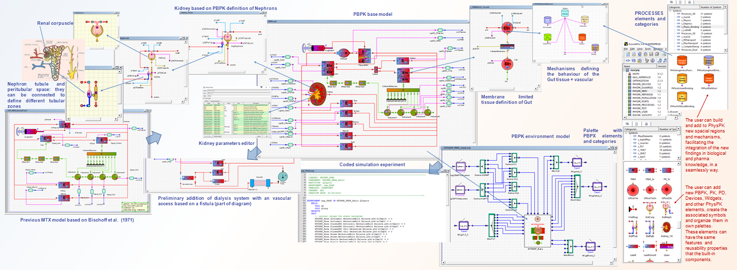 PBPK model with oral administration of MTX and 6-MP under PhysPK